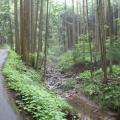 Photos: 五常の滝(埼玉県日高市)6