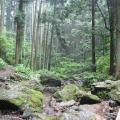 Photos: 五常の滝(埼玉県日高市)14