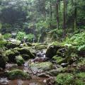 Photos: 五常の滝(埼玉県日高市)17