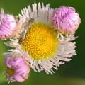 Photos: 正体不明の花