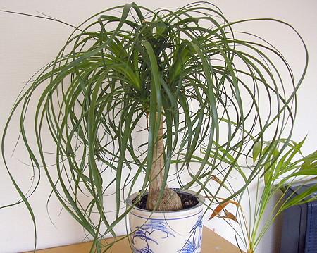 080704観葉植物