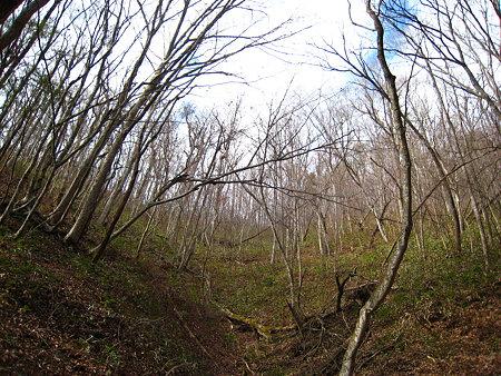 ブナの群生林
