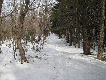 広葉樹林と針葉樹林の中間にある登山道