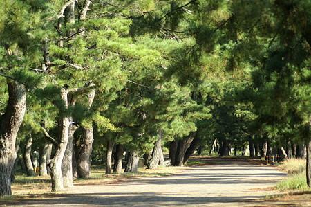 松並木の道