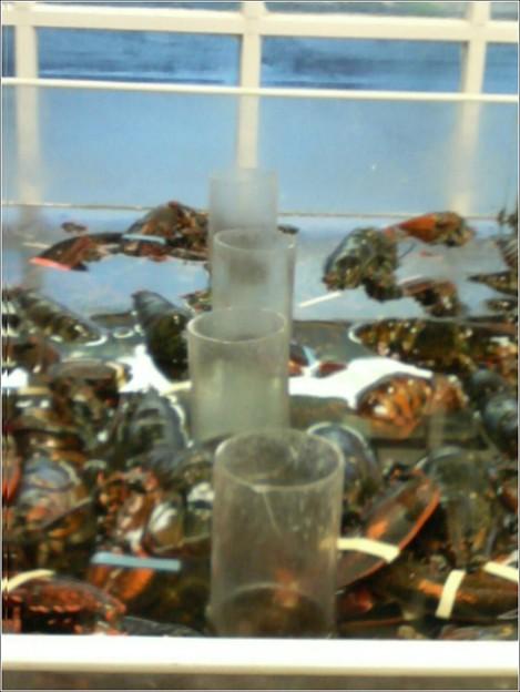 Great Falls VA Cannon Targeting Fish Lobster Irish Method of Attack