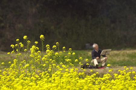 小湊鉄道の葉の花 03