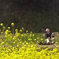 写真: 小湊鉄道の葉の花 03