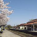 写真: 小湊鉄道の桜 02