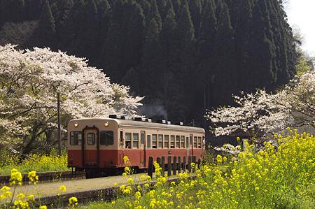 小湊鉄道の桜 11