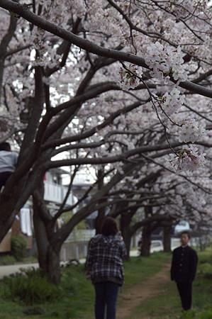 東戸塚の桜 06