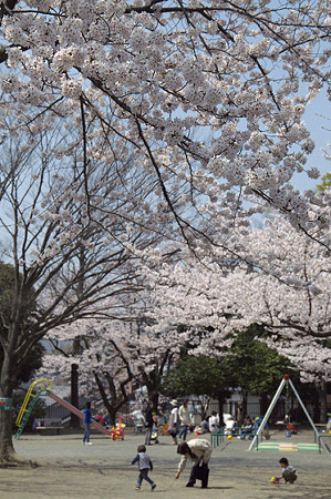東戸塚の桜 09