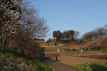 熊野神社となりの畑
