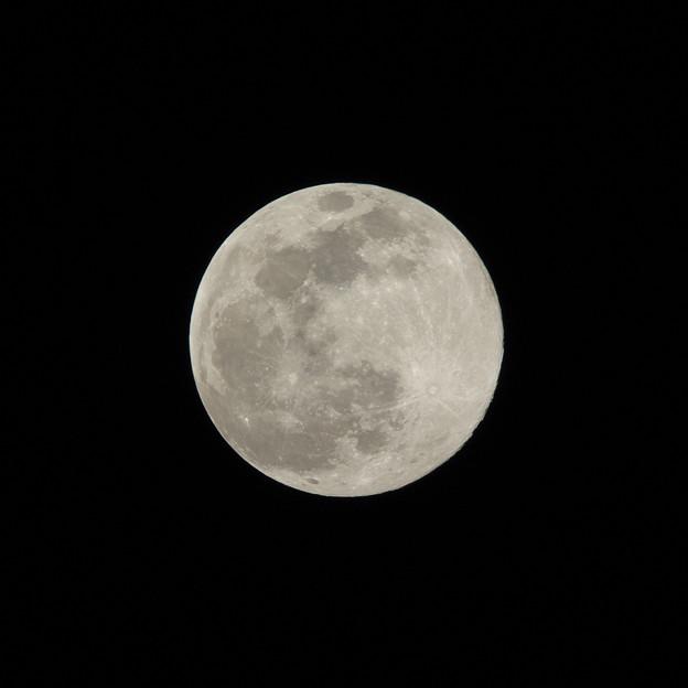 写真: 近地点の満月