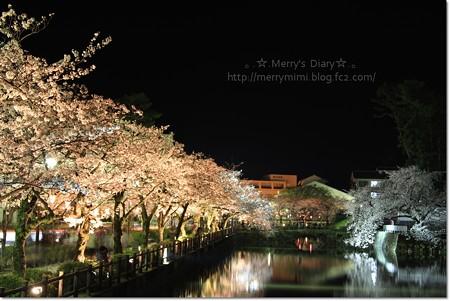 小田原城の夜桜