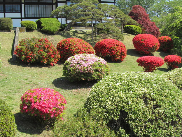26.5.11鹽竈神社のツツジ