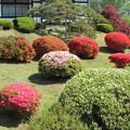 Photos: 26.5.11鹽竈神社のツツジ