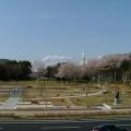 写真: 新しい公園(ロケットと桜2)