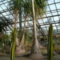 写真: つくば植物園13